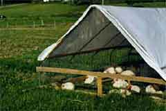 Portable pens for pastured poultry: designs that beat heat