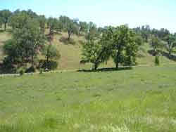green field, browning hills