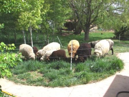 Natural Lawn Mowers Managing Wholes